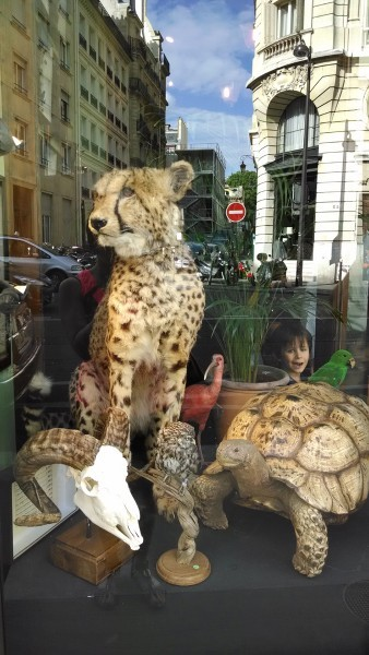Deyrolle Paris Window