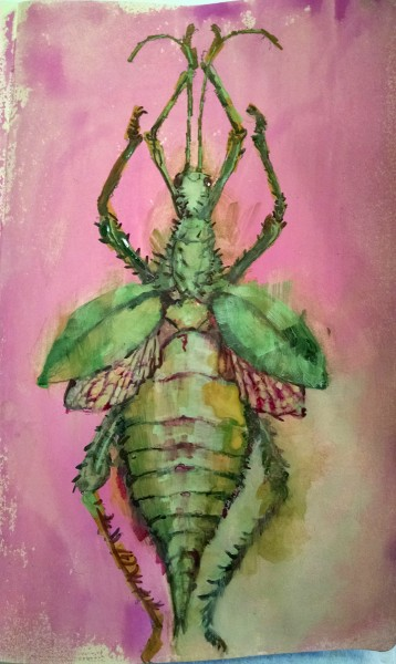 Designer Alchemy Natural Science Insect Specimen Painting